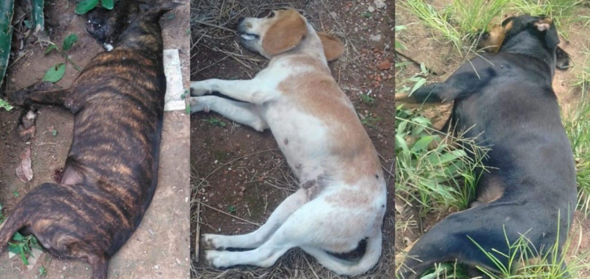 Animais foram mortos por envenenamento - Foto: Reprodução
