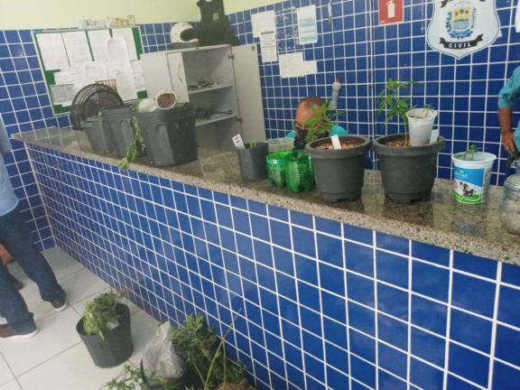 Plantação de maconha apreendida na residência do assistente social - Foto: Divulgação