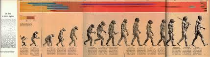 Versão original da imagem, publicada em 1965, ilustra 15 espécies diferentes (Imagem: Wikimedia Commons / Rudolph)