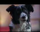 """""""Como Cães e Gatos 3: Peludos Unidos!"""" ganha trailer"""