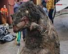 Ratazana gigante alegórica é retirada de esgoto no México
