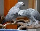 Papagaios são isolados após xingarem visitantes de santuário