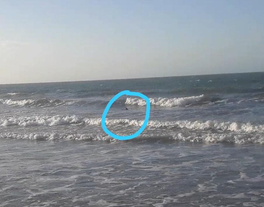 Bióloga confirma a presença de tubarões na praia do Coqueiro no Piauí - Imagem 1