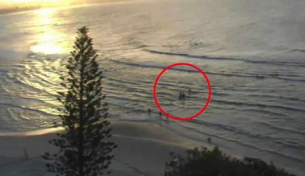 Surfista morre após ataque de tubarão - Imagem 1