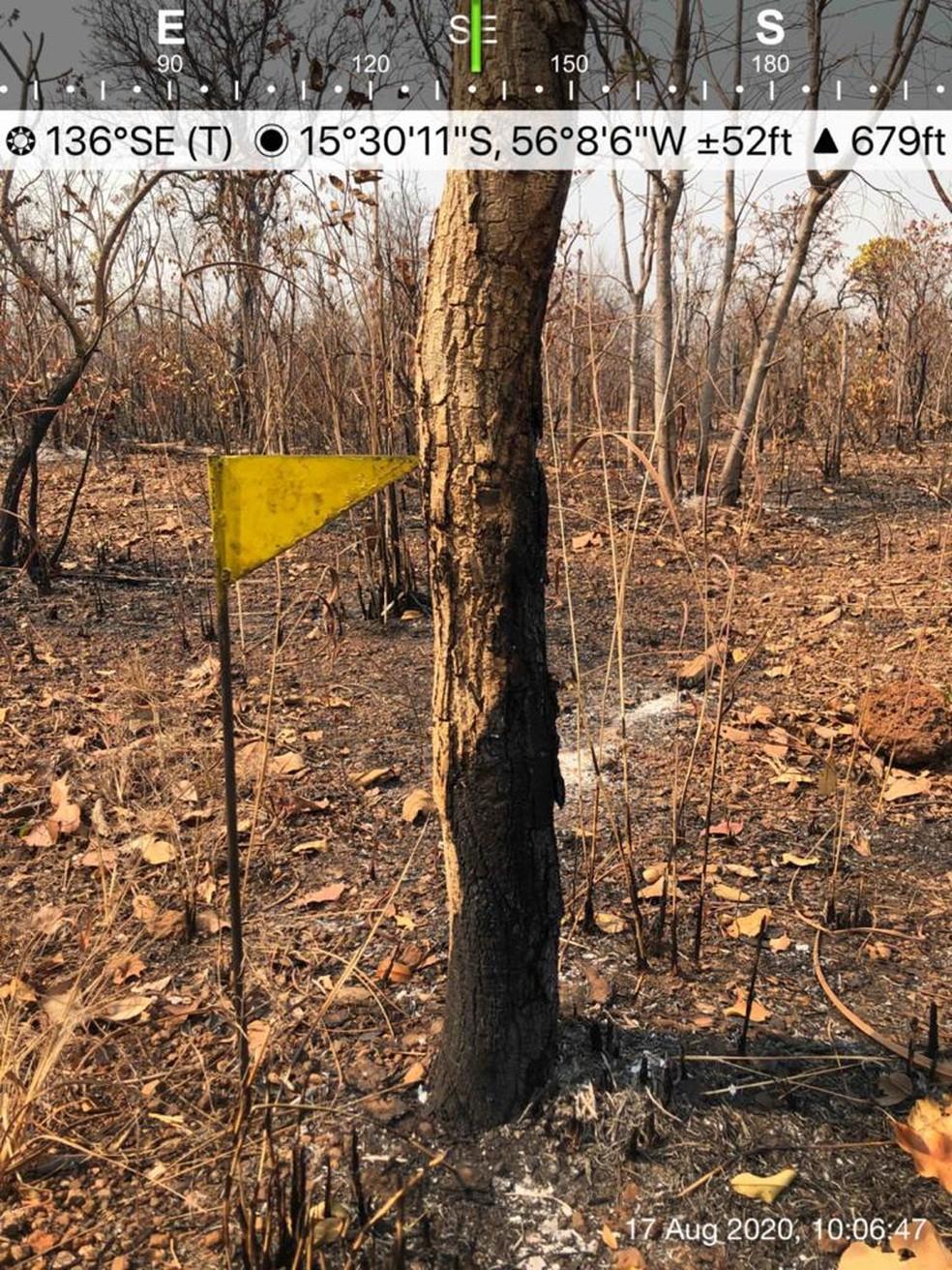 Perícia é feita em incêndios no Pantanal de MT — Foto: Christiano Antonucci