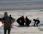 Tragédia: Tubarão atravessa rede de proteção e mata surfista; vídeo