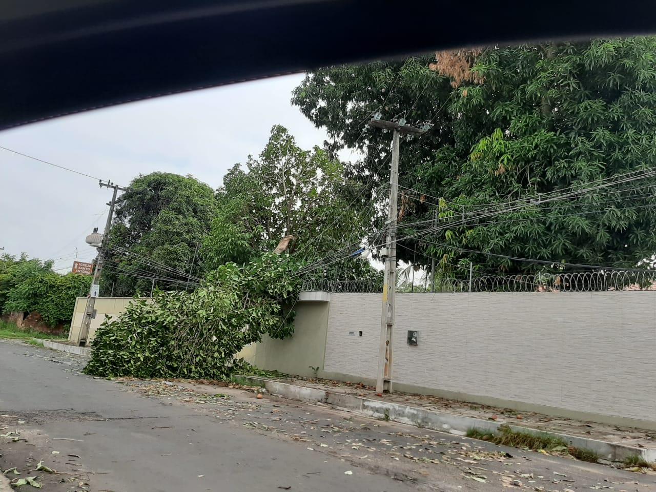 Zona Leste de Teresina, foi uma das mais afetadas por conta da queda de árvores.- Foto: Redes sociais