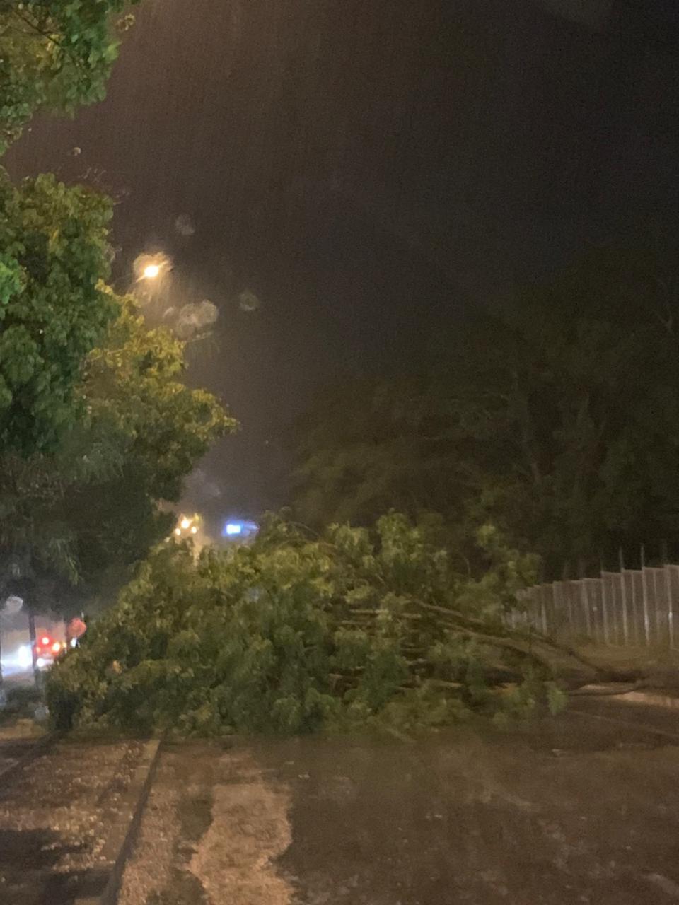 A avenida Presidente Kennedy, na zona Leste de Teresina, foi uma das mais afetadas por conta da queda de árvores. Foto: Redes sociais