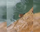 Banhista fica cara a cara com sucuri de três metros em Bonito, vídeo