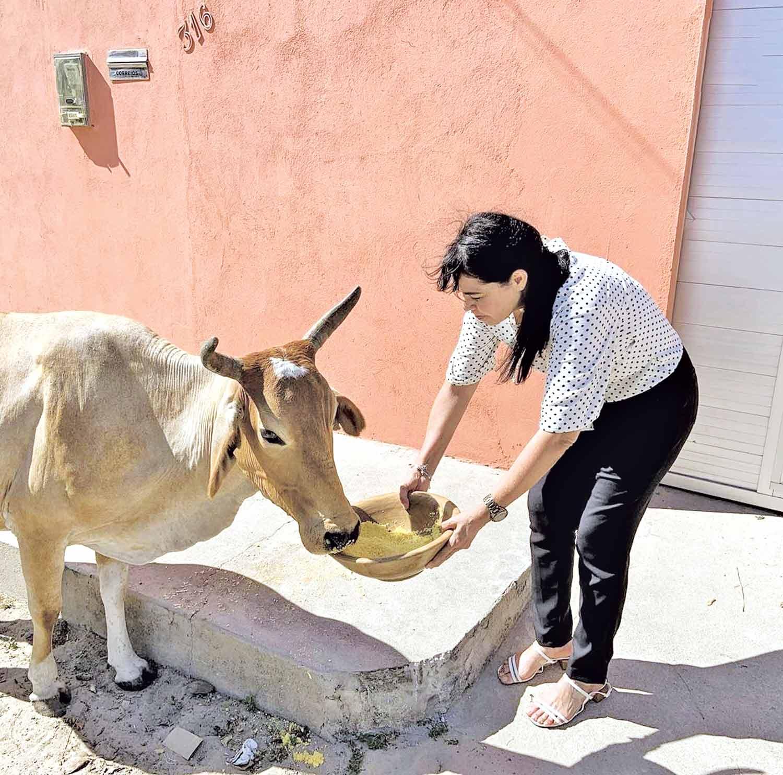 Deputada denuncia abandono de animais e acolhe vaca que come lixo - Imagem 1