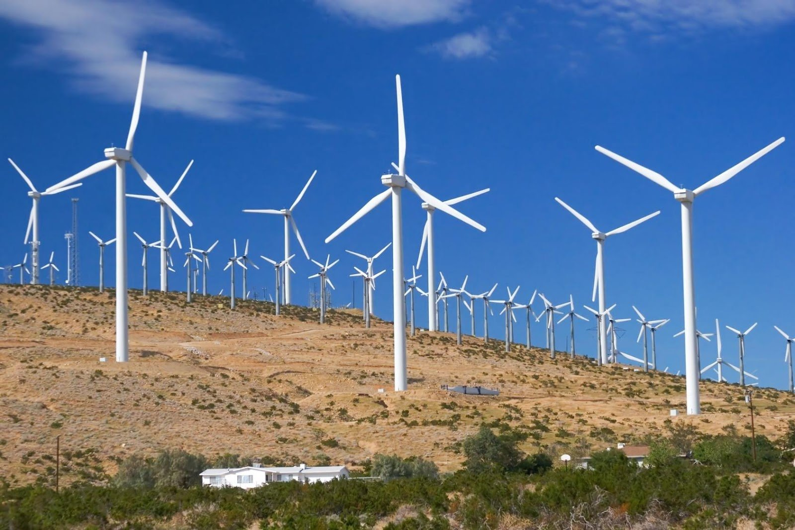 Luiz Gonzaga Beluzzo prega urgência no uso de energias renováveis - Imagem 3