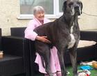 Freddy, o cão mais alto do mundo com 2,26 metros, morre aos 8 anos
