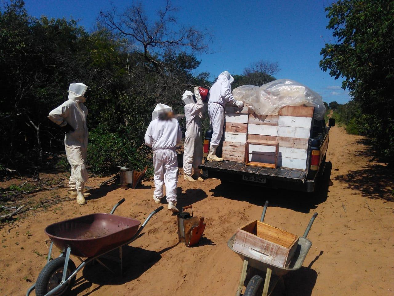 Piauí está no topo da produção de mel do país - Imagem 3