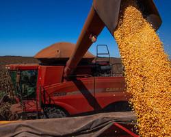 Recorde: safra de grãos deve ultrapassar 268 milhões de toneladas