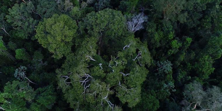 Desmatamento na Amazônia tem queda de 70% em janeiro, diz governo