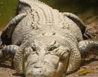Restos humanos são achados em crocodilo durante buscas por pescador