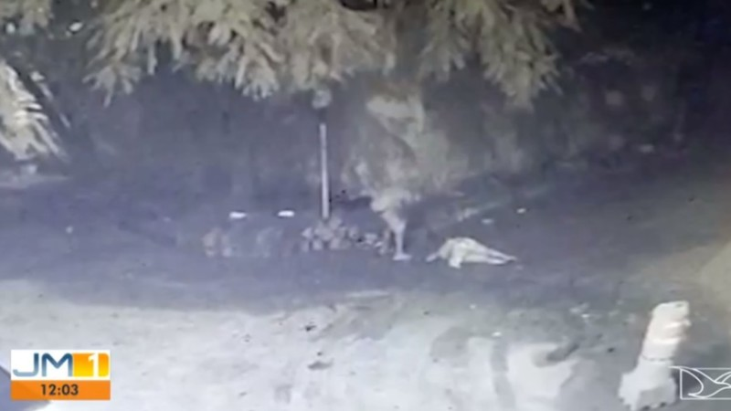 Homem matou a mulher com espancamento - Foto: TV Mirante