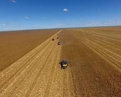 Atraso: colheita da soja atinge 12,4% no Brasil