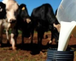 Preço do leite cai; produção em alta e demanda enfraquecida