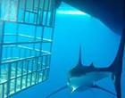 Vídeo mostra tubarão quase devorando mergulhadores na Nova Zelândia
