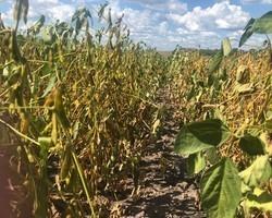 Escassez de chuvas vai prejudicar safra no Piauí; em algumas áreas produção de soja vai cair 20%