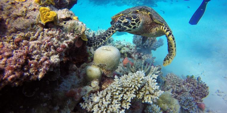 Mudança climática ameaça Patrimônio Mundial Natural