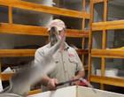 Vídeo assustador mostra píton dando bote no rosto do cuidador; assista