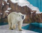Hotel na China tem ursos polares como atração e causa polêmica
