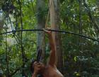 Filme A Última Floresta estreia no É Tudo Verdade Festival