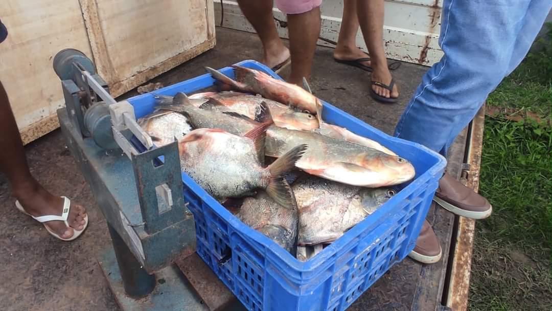 Prefeito João Luiz mantém tradição de distribuição do pescado em Monsenhor Gil - Imagem 2