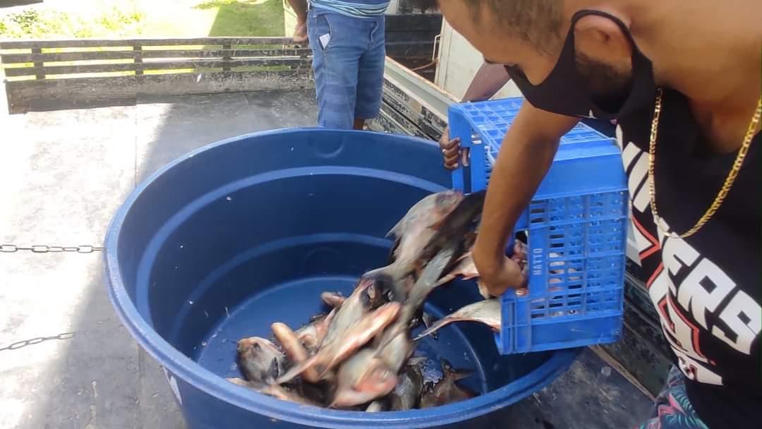 Prefeito João Luiz mantém tradição de distribuição do pescado em Monsenhor Gil - Imagem 4