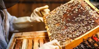 Piauí se torna o maior exportador de mel do Brasil  - Imagem 1