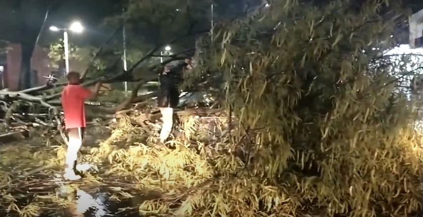 Chuva provoca queda de árvore na avenida Frei Serafim e bloqueia pista - Imagem 1