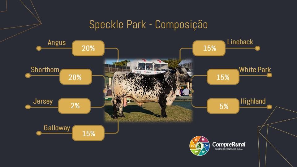 Speckle Park - Reprodução: Compre Rural