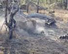 Leões atacam e dilaceram cães selvagens na África do Sul; Vídeo