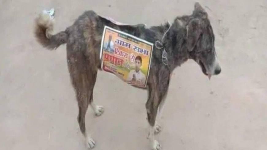 Cachorro com adesivo eleitoroal colado no corpo (Foto: Reprodução/ Extra)