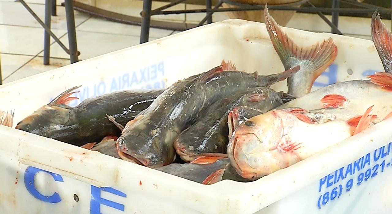 Produção de peixe no Piauí é a maior do Nordeste - Imagem 3