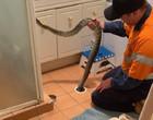 Mulher tenta desentupir banheiro e encontra cobra píton; vídeo