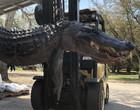 Caçador acaba com mistério de mortes de cães após matar crocodilo