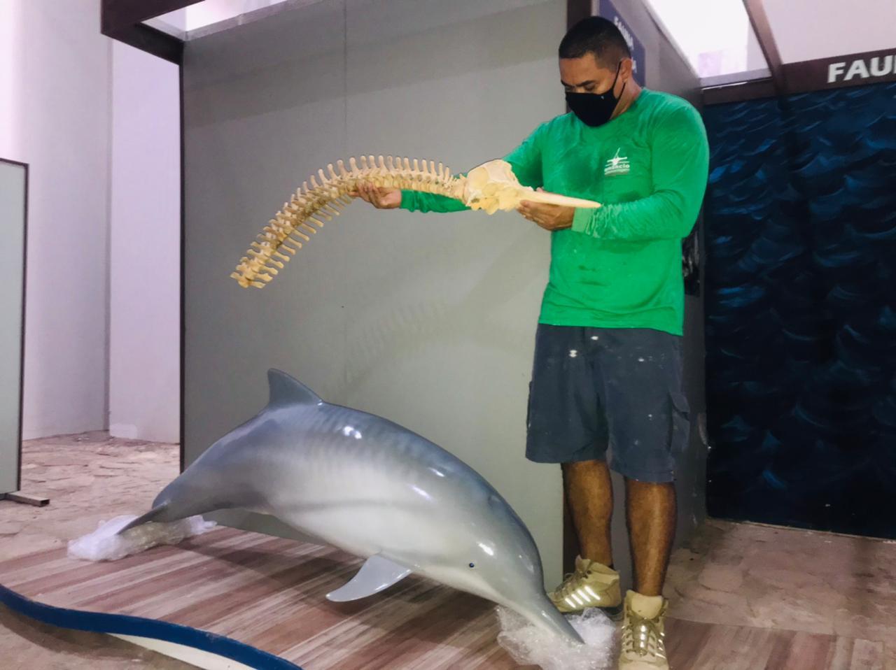 Fábio: Museu terá ossadas e réplicas de baleia, boto e peixe-boi - Imagem 1