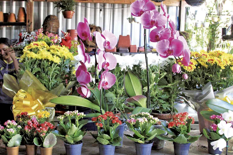 Setor de plantas ornamentais e flores teve aumento nas vendas- Foto: Jornal MN