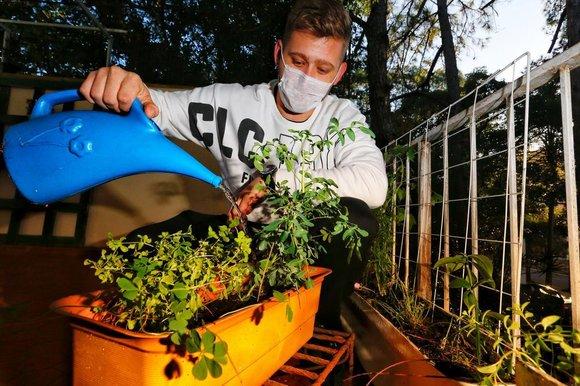 Vendas de plantas aumentam em todo país mesmo com pandemia- Foto/Reprodução