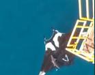 Tubarão nada por cima de arraia gigante em vídeo impressionante