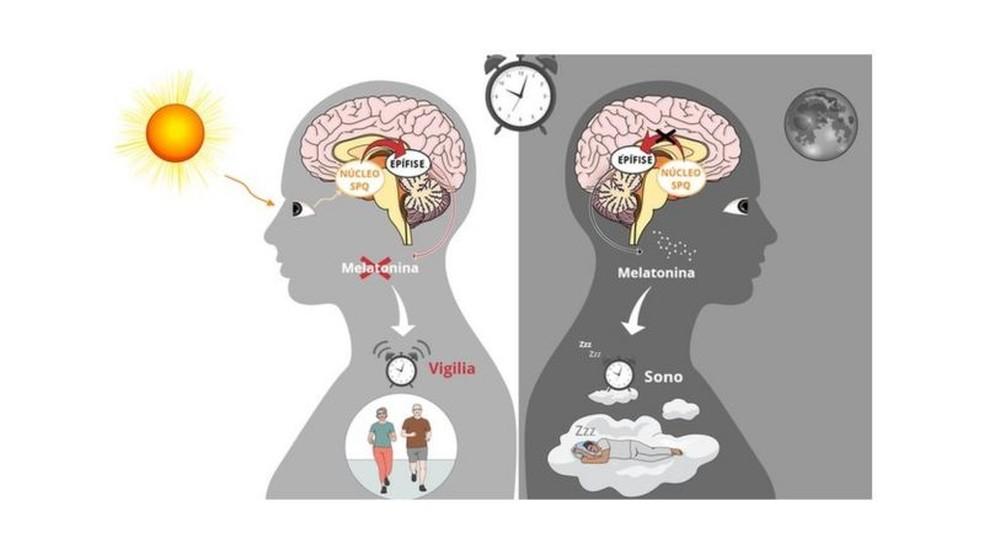 A regulação do sono em humanos. Esquerda: a luz é capturada pela retina. O sinal de luz é transmitido pelo cérebro e impede a liberação de melatonina pela epífise. À direita: à noite, a ausência de luz estimula a produção do hormônio do sono. — Foto: Gráfico feito via Mindthegraph.com