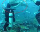 Mergulhador quase perde a cabeça após ataque de tubarão; vídeo