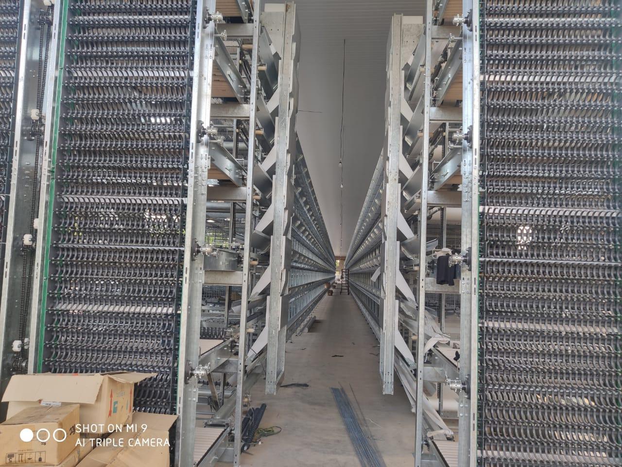 Piauí produz meio milhão de ovos por dia - Imagem 2