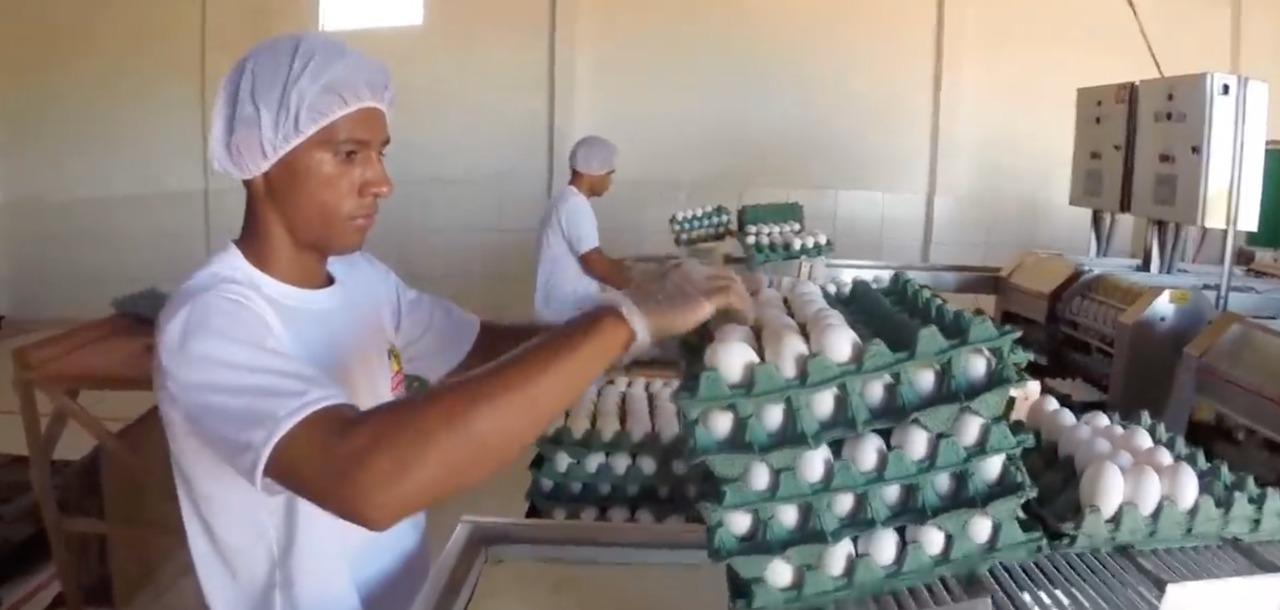 Piauí produz meio milhão de ovos por dia - Imagem 1