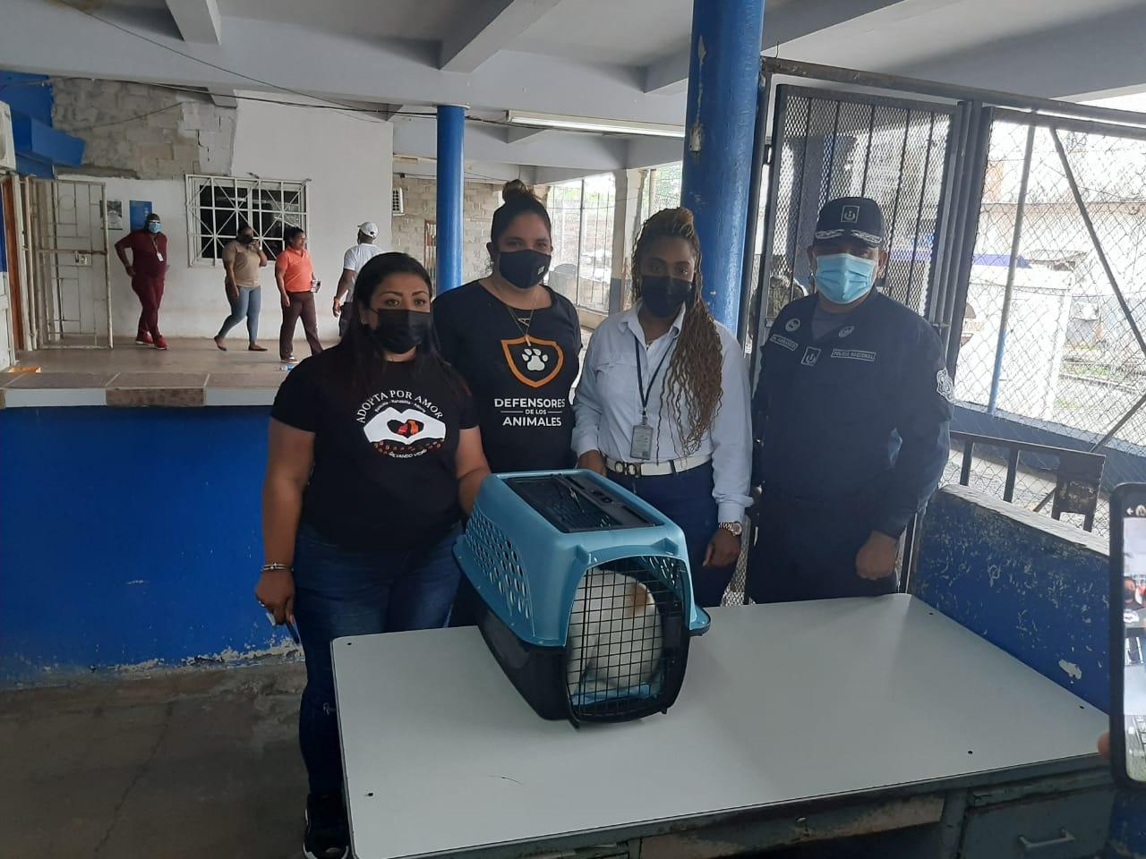 Gato é preso por transportar drogas - Foto: Reprodução / TwitterGato é preso por transportar drogas - Foto: Reprodução / Twitter