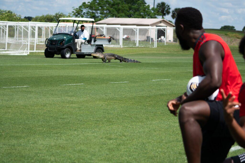 Funcionário da equipe tentou retirar o animal usando um carrinho de golfe - Foto: Toronto/FC