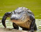 Em vídeo, javali escapa de ataque devastador de enorme crocodilo